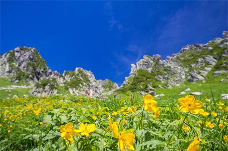 【ハイキング入門】標高2612m天空の花畑・千畳敷カールへ 絶景日帰りハイキング