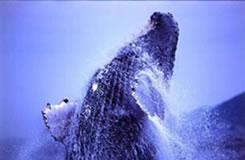 【期間限定ホエールウォッチングツアー付!】人気のホエールウォッチングスポット「慶良間諸島」で冬しか見れない景色に出会う♪組み合わせ自由自在の沖縄フリープラン2泊3日